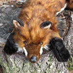 Realistic Fox Hug Stuffed Animal